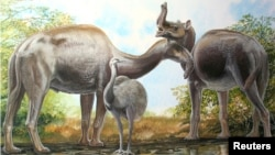 An artist's rendering shows the South American native ungulate Macrauchenia.