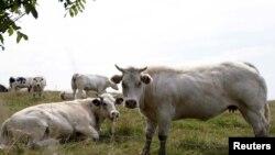 Según la OMS, la propagación de la tuberculosis en animales, podría afectar a los seres humanos.