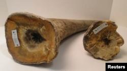Des cornes de rhinocéros pris en photo par un bureau d'avocat dans le New Jersey, États-Unis, 19 décembre 2013 (Photo d'illustration).