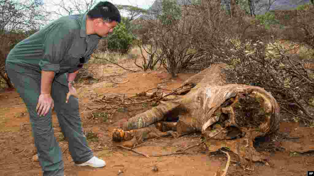 CHINA  Retired Houston Rockets basketball star Yao Ming toured devastated areas of Kenya's wildlife parks to tell millions of China's television viewers to stop buying ivory. He examined the carcass of an elephant in Samburu in August,  2012.