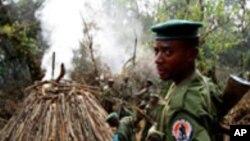 Un garde forestier à Virunga