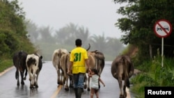 A man and his son herd their livestock down a highway in the rural area of La Montanita in Florencia Province, Colombia, May 2, 2012.