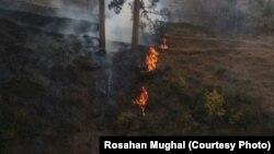 پاکستان کشمیر کے جنگلات میں آگ بھڑک اٹھنے کے واقعات میں اضافہ ہو رہا ہے۔