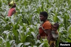 A Malawian subsistence farmer surveys communal maize fields in Dowa near the capital Lilongwe, Feb. 3, 2016.