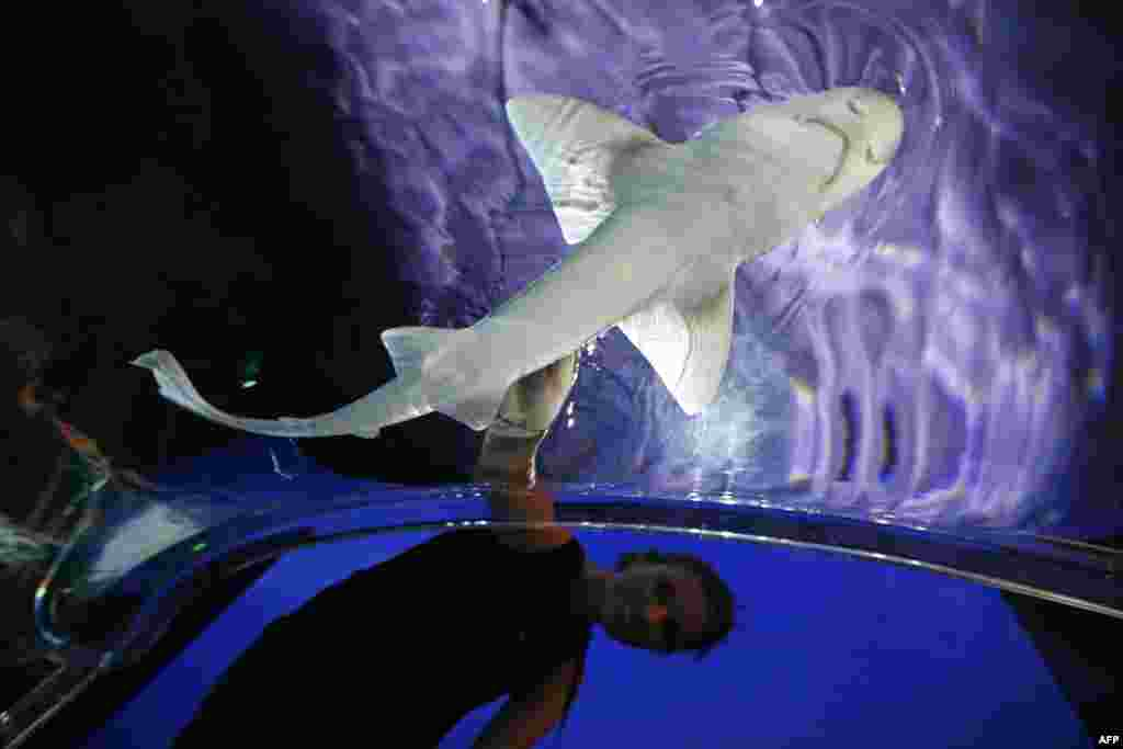 "People touch a shark in the exhibition ""Requins"" (Sharks) in the Oceanography museum in Monaco. The exhibition opens on June 8 on the eve of World Oceans Day."