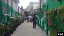 Gang-gang sempit di Bandung pun bisa hijau dengan adanya vertical garden. (VOA/R. Teja Wulan)