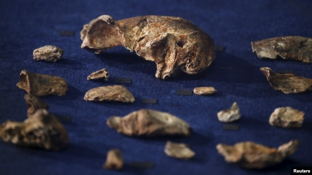 FILE - More than 1,500 bones from 15 individuals from a new human species called Homo naledi were found in a South Africa cave.