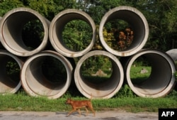 FILE - A stray dog walking past drainage pipes at the graveyard in Bukit Brown, one of Singapore's oldest cemeteries, Aug. 16, 2011.