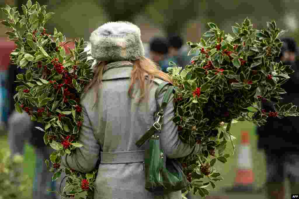 A woman carries bundles of holly during the annual Mistletoe and Holly Auctions held at Tenbury Wells, central England, Dec. 4, 2018.