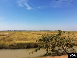 A rice field near a new military camp in rural Tram Sasar commune, Siem Reap province, where 1,430 new voters registered in September, many of them soldiers who later returned to their home bases in neighboring Oddar Meanchey province. (Julia Wallace/VOA Khmer)