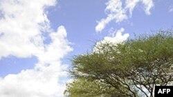 Քենիայի զորամիավորումները շարունակում են Սոմալիում «ալ-Շաբաբ»-ի դեմ ուղղված գործողությունները
