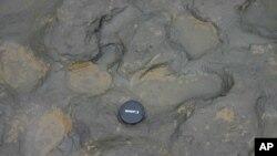 Jejak-jejak kaki yang diperkirakan berusia lebih dari 800 ribu tahun, ditemukan di Happisburgh, Norfolk, Inggris. (AP/British Museum)
