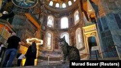 Gli, kucing penunggu Hagia Sophia atau Ayasofya, Situs Warisan Dunia UNESCO yang merupakan katedral Bizantium sebelum diubah menjadi masjid, Turki, 2 Juli 2020. (Foto: REUTERS/Murad Sezer)