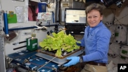 In this image posted to her Twitter feed on May 30, 2017, astronaut Peggy Whitson holds up Chinese cabbage grown in the International Space Station. During her third and latest mission, the 57-year-old biochemist became the oldest woman to have been in space and now has spent more time in space than any other American.