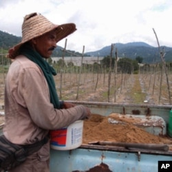 A migrant worker in a cucumber farm that is located just a 200 meters away from the radioactive waste dump site in the outskirts of Papan town. voanews.