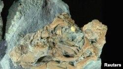 Embrio dinosaurus yang ditemukan di wilayah Patagonia (Argentina) ini termasuk dalam jenis herbivora Titanosaurus yang mematahkan keraguan asal usul dinosaurus yang dilahirkan seperti mamalia atau melalui telur seperti jenis reptil (Foto: dok).