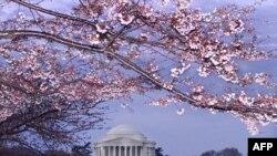 Lễ hội Hoa Anh Ðào hằng năm tại Washington, DC
