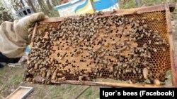 Фото: Бджільництво набирає все більшої популярності серед новоприбулих до США українців