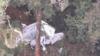 Pesawat Rimbun Air Cargo Ditemukan, Nasib Awak Belum Diketahui