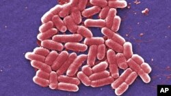 Superbug Infection