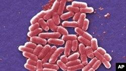 Autoridades militares estadounidenses reportaron el primer caso de bacteria resistente a antibióticos en una mujer de 49 años, en Pennsylvania, el 26 de mayo de 2016.