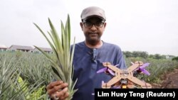 University Putra Malaysia professor Mohamed Thariq holds pineapple leaves and a drone. Picture taken on December 12, 2020. (REUTERS/Lim Huey Teng)