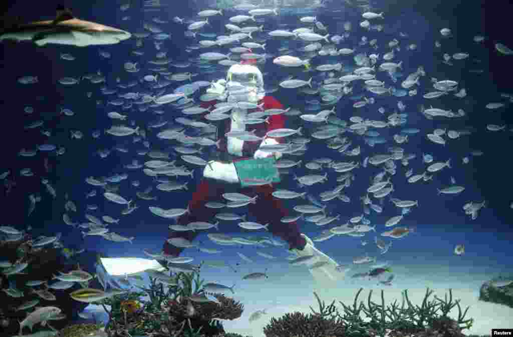 A diver dressed in a Santa Claus costume feeds fish at the Sunshine Aquarium in Tokyo, Japan.