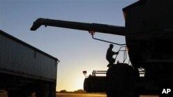 美国农民用联合收割机收黄豆