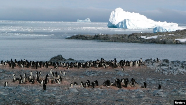Adelie penguins in Antarctica. (January 18, 2005 file photo)
