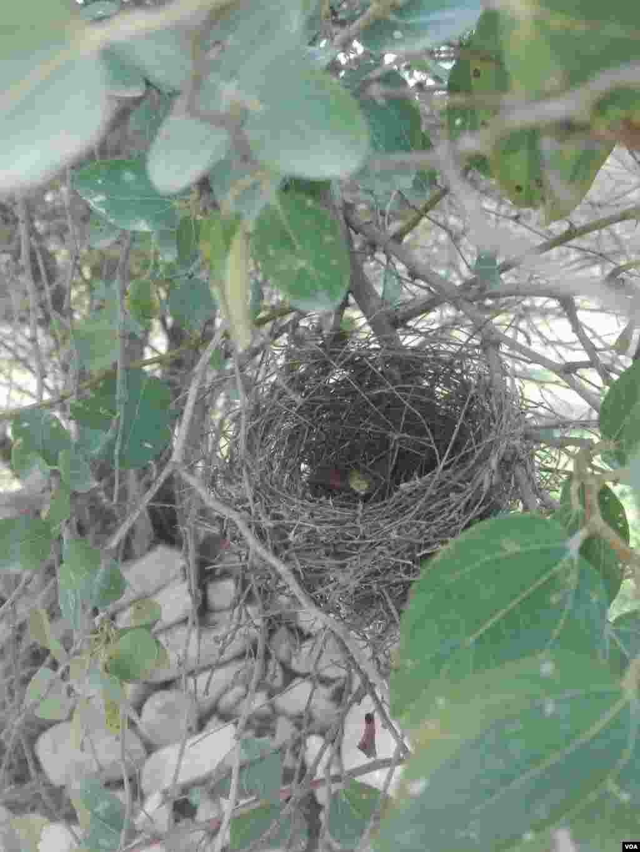 لانه پرنده بر روی شاخه های درخت عکس: محسن (ارسالی شما)