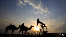 Pengendara unta melewati ladang minyak di padang pasir di Bahrain. Harga minyak sempat menyentuh level tertinggi dalam dua bulan terakhir karena penurunan produksi AS dan kemungkinan AS menerapkan sanksi kepada Venezuela. (Foto:dok)