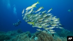 Palau is home to more than 1,300 species of fish and 700 species of coral.