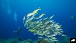 Palau tiene más 1.700 especies de peces y más de 700 tipos de coral.