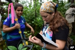 In this Nov. 6, 2018 photo, animal science intern Viviana Berdecia, left, watches forest biologist Jessica Ilse record data near the Iguaca Aviary at El Yunque, Puerto Rico. (AP Photo/Carlos Giusti)