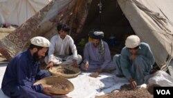 افغان سوداګر جلغوزي پاکستان ته وړي او خرڅوي یې.