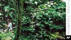 La FAO fait état d'un recul de la déforestation dans le monde