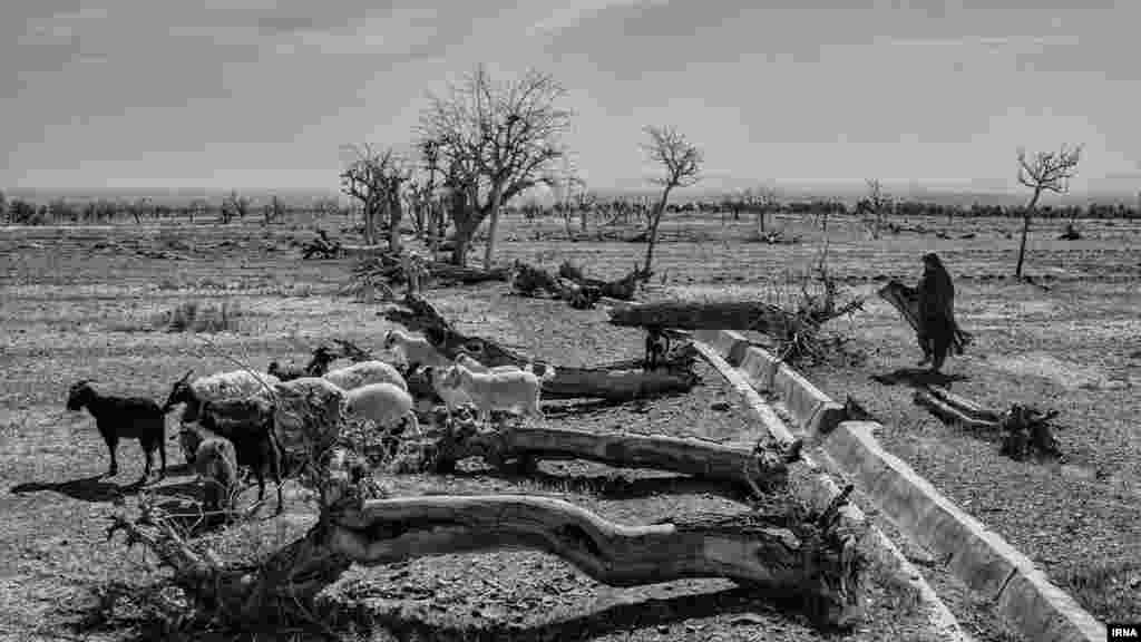 خشکسالی در شرق ایران عکس: عطا رنجبر، ایرنا