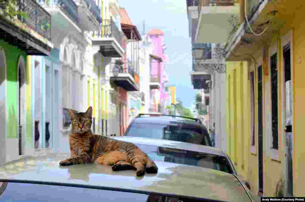 A feral cat lounges in historic San Juan, where colorful facades brighten the city streets.