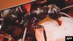 Скрытая жизнь муравьев