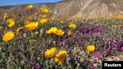 加州一國家公園景緻。