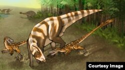 Saurornitholestes sullivani attacks a subadult hadrosaur Parasaurolophus tubicen. (Illustration: Mary P. Williams)