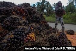 Seorang pekerja membawa buah sawit pada saat panen di desa Teluk Payu di Banyuasin. (Foto: Antara/Nova Wahyudi via REUTERS)