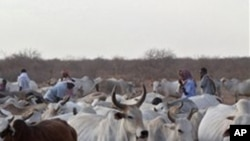Guiné-Bissau: Controlo de terras e roubo de gado causam 3 mortos
