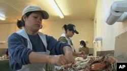移民在马里兰烹制螃蟹