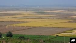 북한 황해북도 사리원의 논밭 (자료사진)