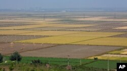 지난 9월 북한 황해북도 사리원의 한 협동농장. (자료사진)