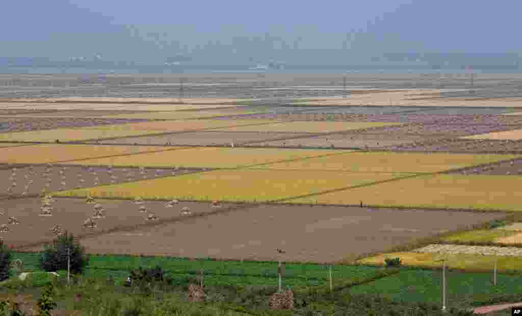 The fields of a cooperative farm in Sariwon, North Hwanghae Province, North Korea.