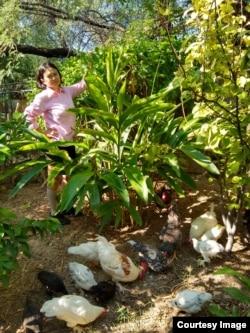 Elina Sihombing sibuk beternak ayam dan menanam lengkuas, pohon markisa dan tanaman lainnya di Arizona (foto: courtesy).