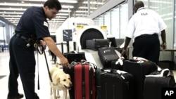 Petugas keamanan melakukan pemeriksaan atas bagasi di bandara O'Hare, Chicago (foto: ilustrasi).