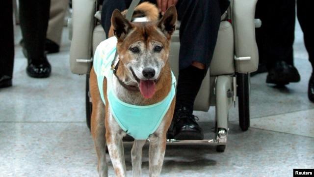 Con chó của vua Thái Lan tại bệnh viện Syriaraj ở Bangkok.